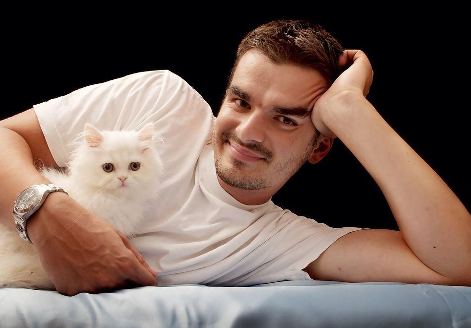Qué hacer antes de adoptar un gato persa