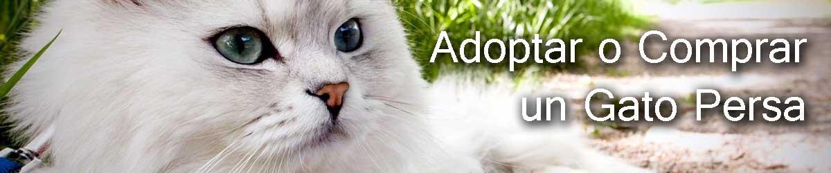 consejos para adoptar un gato persa