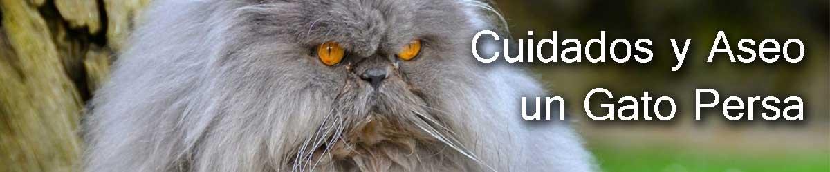 como cuidar a mi gato persa