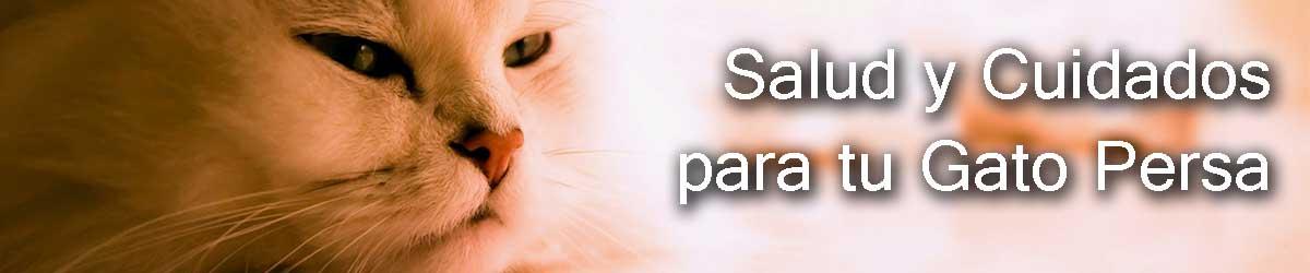 cuidar la salud de mi gato persa